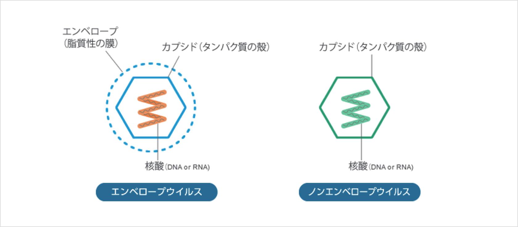 光触媒による抗ウイルスメカニズムの特徴